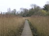 The path through the reed beds near Wilford Bridge.