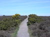 Heading northwest across Dunwich Heath.