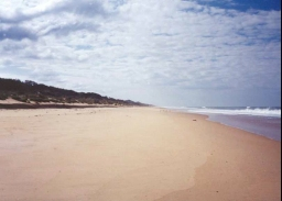 AG34	Looking east along Ninety Mile Beach near the Honeysuckles.