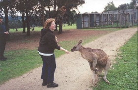 AH13	Sam feeding a Grey Kangaroo.