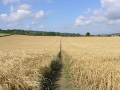Picture of the North Downs Way